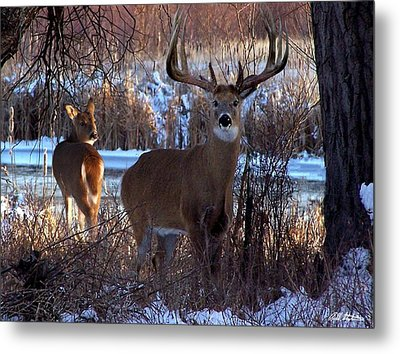 Heartbeat Of The Wild Metal Print by Bill Stephens