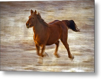 Horse In Motion Metal Print by James Steele