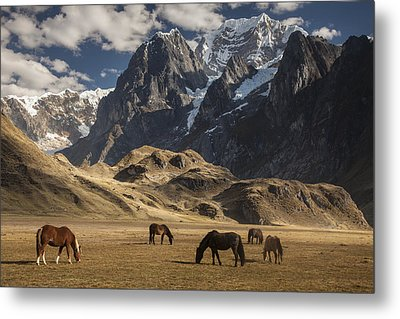 Horses Grazing Under Siula Grande Metal Print by Colin Monteath