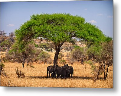 Huddled In Shade Metal Print by Adam Romanowicz