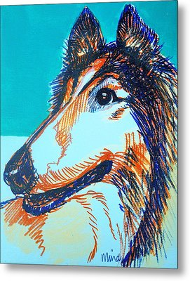 Interested Collie Metal Print by Melinda Page