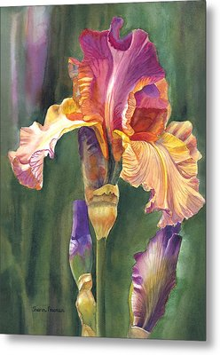 Iris On The Warm Side Metal Print by Sharon Freeman