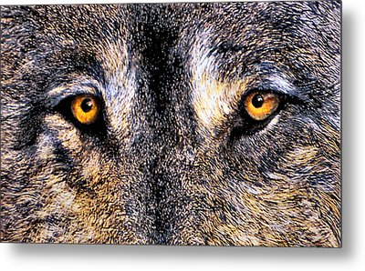 Just Watching Wolf Metal Print by JoLyn Holladay