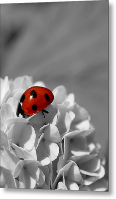 Lady Bug Sc Metal Print by Martina Fagan