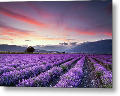 Lavender Field Metal Print by Evgeni Dinev Photography