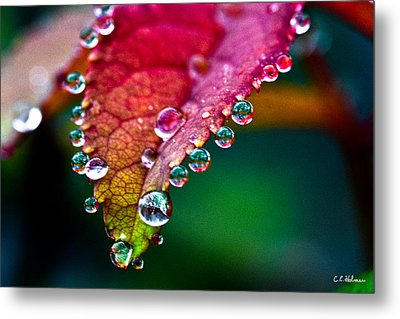 Liquid Beads Metal Print by Christopher Holmes