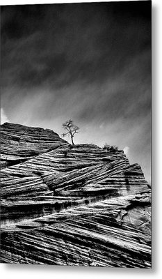 Lone Tree Rid Metal Print by Sarah-jane Laubscher