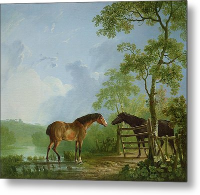 Mare And Stallion In A Landscape Metal Print by Sawrey Gilpin