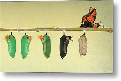 Monarch Butterfly Metal Print by Anne Geddes