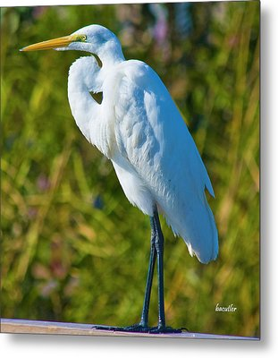 My Better Side Metal Print by Betsy Knapp