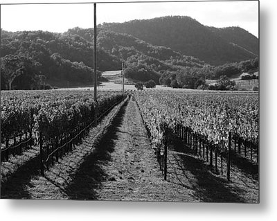 Napa Valley Vineyard .  Black And White . 7d9020 Metal Print by Wingsdomain Art and Photography