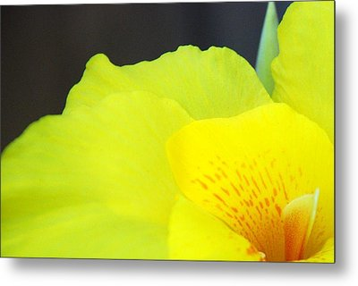 Oh Canna You See Metal Print by Diane Fiore