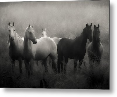 Out Of The Mist Metal Print by Ron  McGinnis