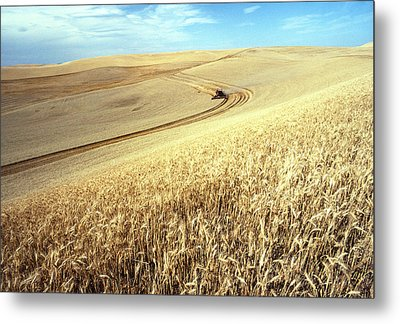 Palouse Wheat Metal Print by USDA and Photo Researchers
