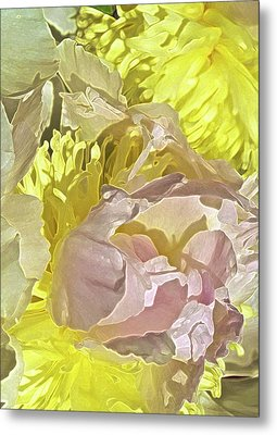 Peony Perfect Metal Print by Gwyn Newcombe