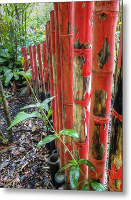 Red Bamboo Metal Print by Dolly Sanchez