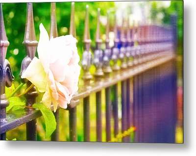 Rose Head Metal Print by Tom Gowanlock