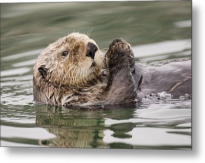 Sea Otter Profile Metal Print by Tim Grams