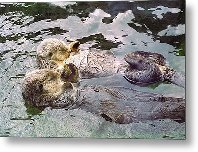 Sea Otters Holding Hands Metal Print by BuffaloWorks Photography