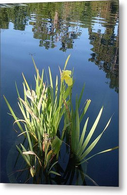 Shalom Park Yellow Canna Lily Metal Print by Warren Thompson