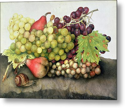 Snail With Grapes And Pears Metal Print by Giovanna Garzoni