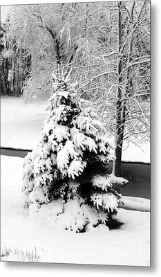 Snow Covered Trees Metal Print by Kathleen Struckle