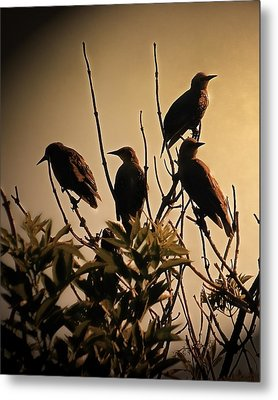 Starlings Metal Print by Sharon Lisa Clarke