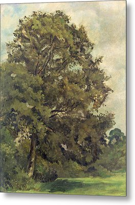 Study Of An Ash Tree Metal Print by Lionel Constable