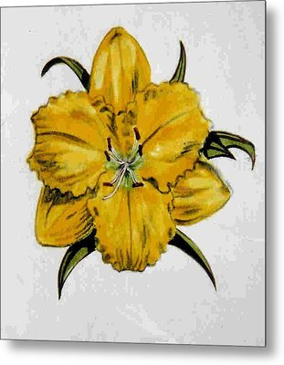 Summer Daylily Metal Print by Dy Witt