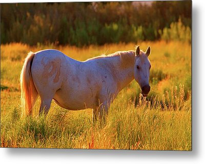 Sunset Mare Metal Print by Gus McCrea