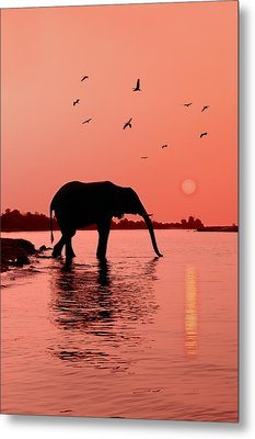 Sunset With Elephant Metal Print by Christian Heeb