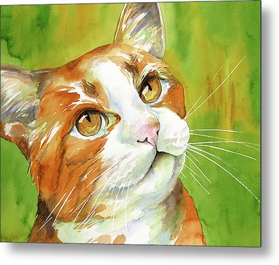 Tan And White Domestic Cat Metal Print by Cherilynn Wood