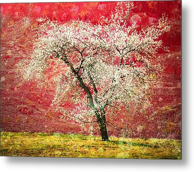 The First Blossoms Metal Print by Tara Turner