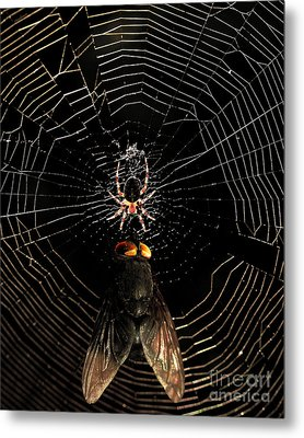 The Spider  And The Fly Metal Print by Wingsdomain Art and Photography