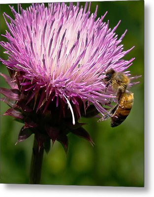 The Thistle And The Stinger Metal Print by Ron Plasencia