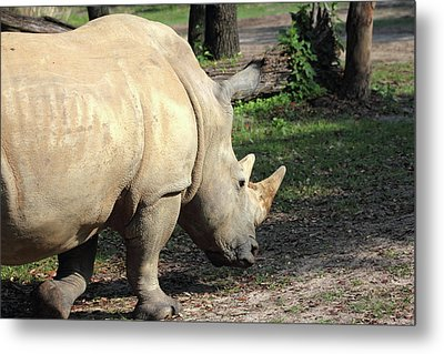 Wandering Rhino Metal Print by Mary Haber
