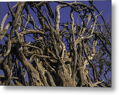 Wild Tangled Tree Roots Metal Print by Garry Gay