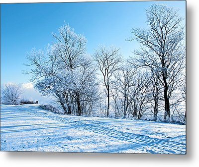 Winter Lights Metal Print by Svetlana Sewell