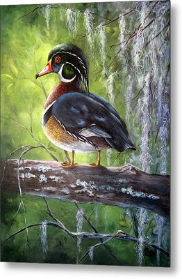 Wood Duck Metal Print by Mary McCullah