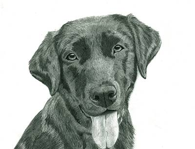 Custom Pet Portrait-medium Poster by Megan Johnson