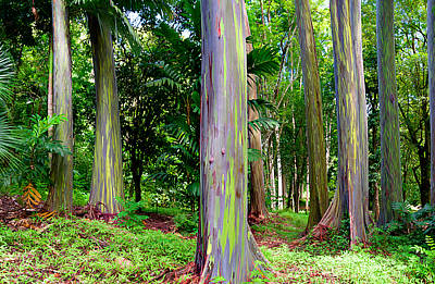 Rainbow Eucalyptus Poster by Monica and Michael Sweet