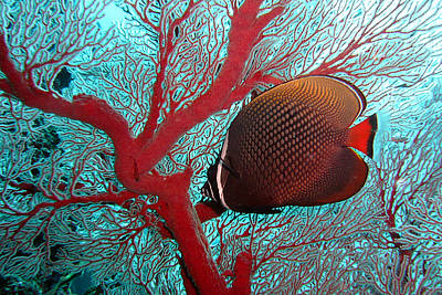 Sea Fan And Butterflyfish Poster by Takau99
