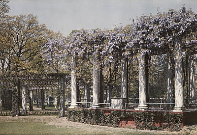Wistaria On Old Amphitheater Poster by Charles Martin