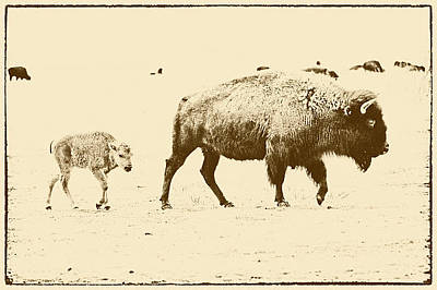 Bison Mother And Calf Print by Melany Sarafis