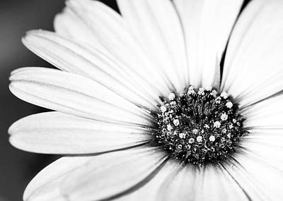 Lazy Daisy In Black And White Print by Sabrina L Ryan
