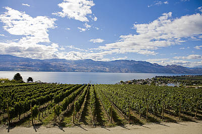 Kelowna Photograph - A Vineyard In Canada On A Summer Day by Taylor S. Kennedy