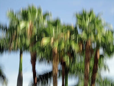 Icm Photograph - Abstract Florida Royal Palm Trees by Juergen Roth