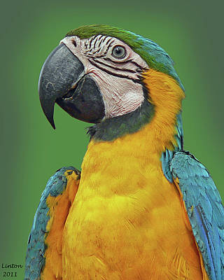 Macaw Photograph - Blue-and-yellow Macaw by Larry Linton