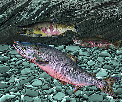Fly Fisherman Painting - Chum Salmon by Ralph Martens