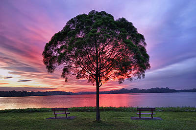 Singapore Photograph - Colorful Light Seen Behind Tree by Pang Tze Ru